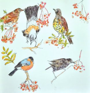 Bird visitors to the rowan tree sketches