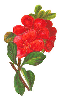 botanical art red flower image