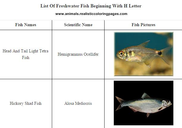 List of freshwater fish beginning with H
