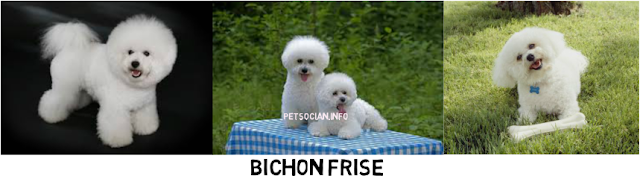 Bichofries_Pets