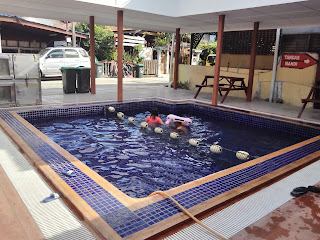 chalet ada swimming pool