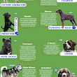 Del features on Doggie Nation's Infographic!