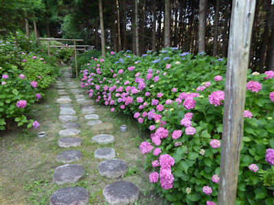 長尾の寺・正俊寺の紫陽花