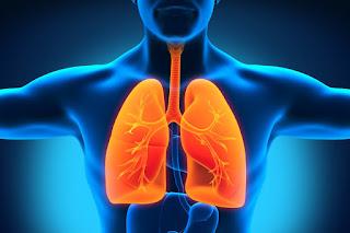 Perbedaan Ciri-Ciri Penyakit TBC Dan Penyakit Paru-Paru Basah
