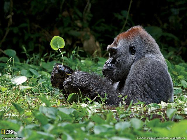 20 Gambar Inspirasional Cara Manusia Menghormati Alam