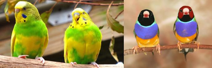 Kuşların Kendi Tüyünü Yemesinin 10 Nedeni