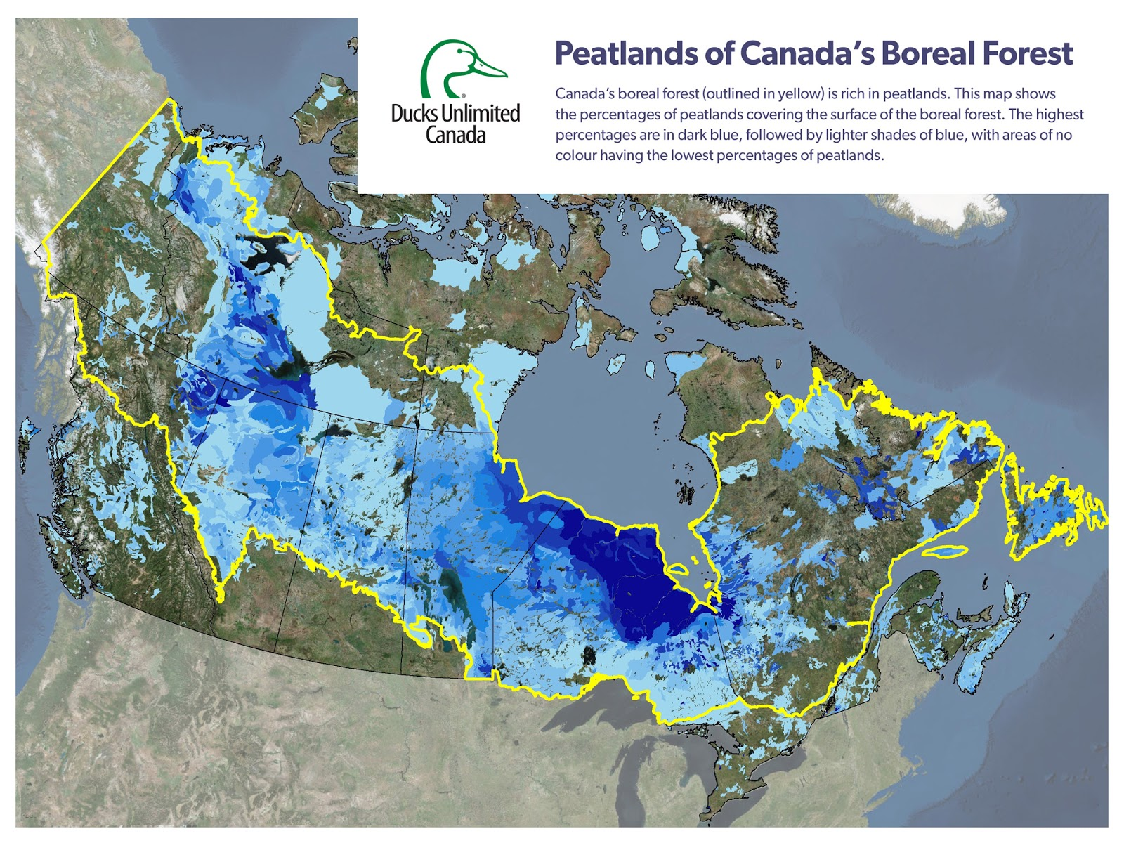 Carbon Storing Peatlands in Canada's Boreal Forest