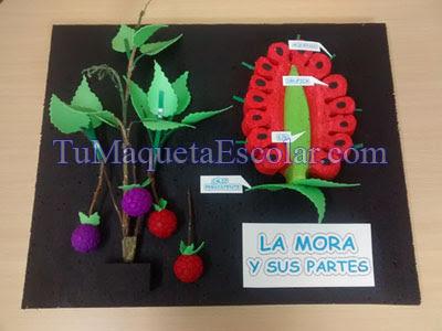 maqueta de la planta y semilla de mora