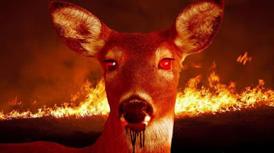 """Oh Nah: Infectious """"Zombie Deer"""" Disease Found In 24 States & Could Possibly Spread To Humans!"""