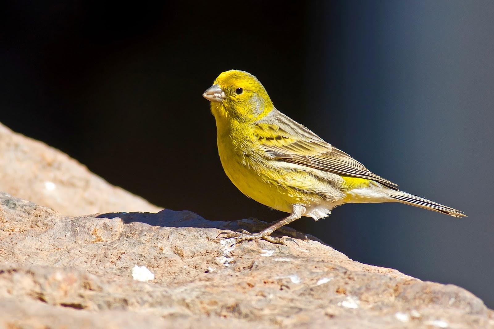 alasan memelihara burung, mengapa memelihara burung