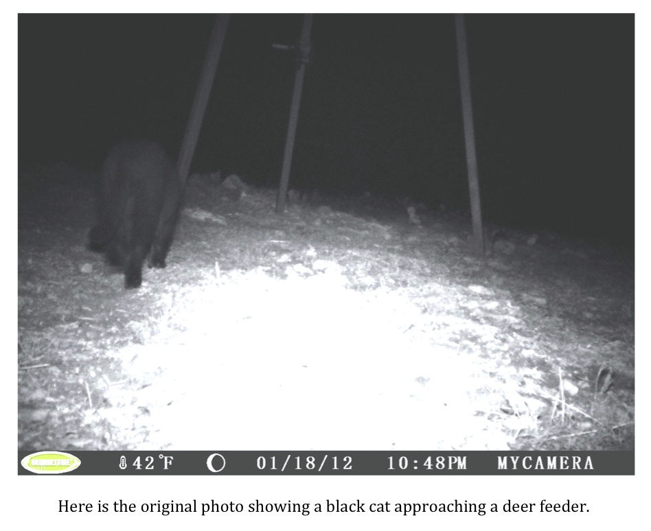 Texas Cryptid Hunter Black Panther Photographed In The