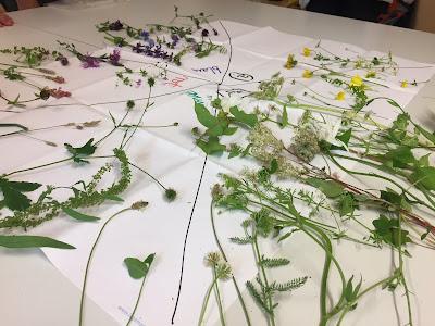 Pflanzen nach Blütenfarben geordnet.
