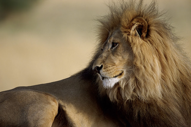 Okonjima Africat Otjiwarongo, Namibia