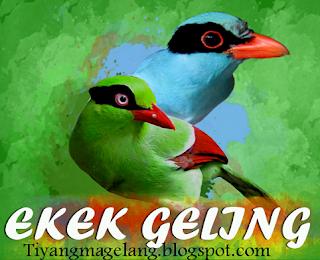 Download suara burung ekek geling gacor
