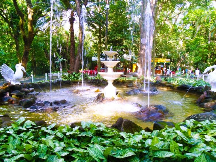 fonte água bosque jequitibás