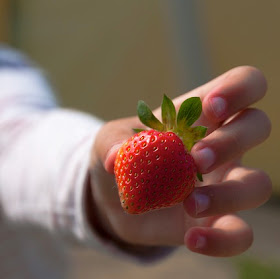 grabbing a strawberry