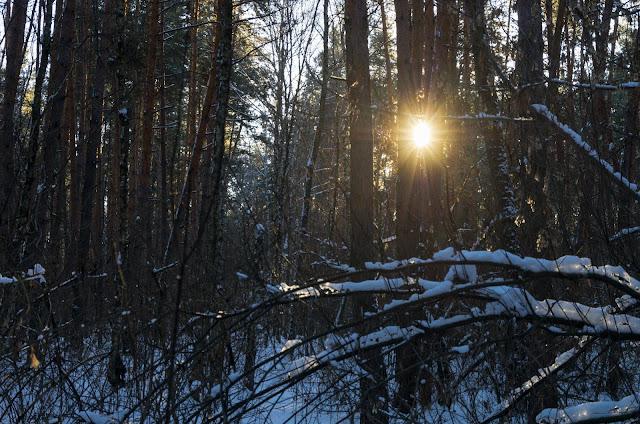 сонце світить крізь дерева