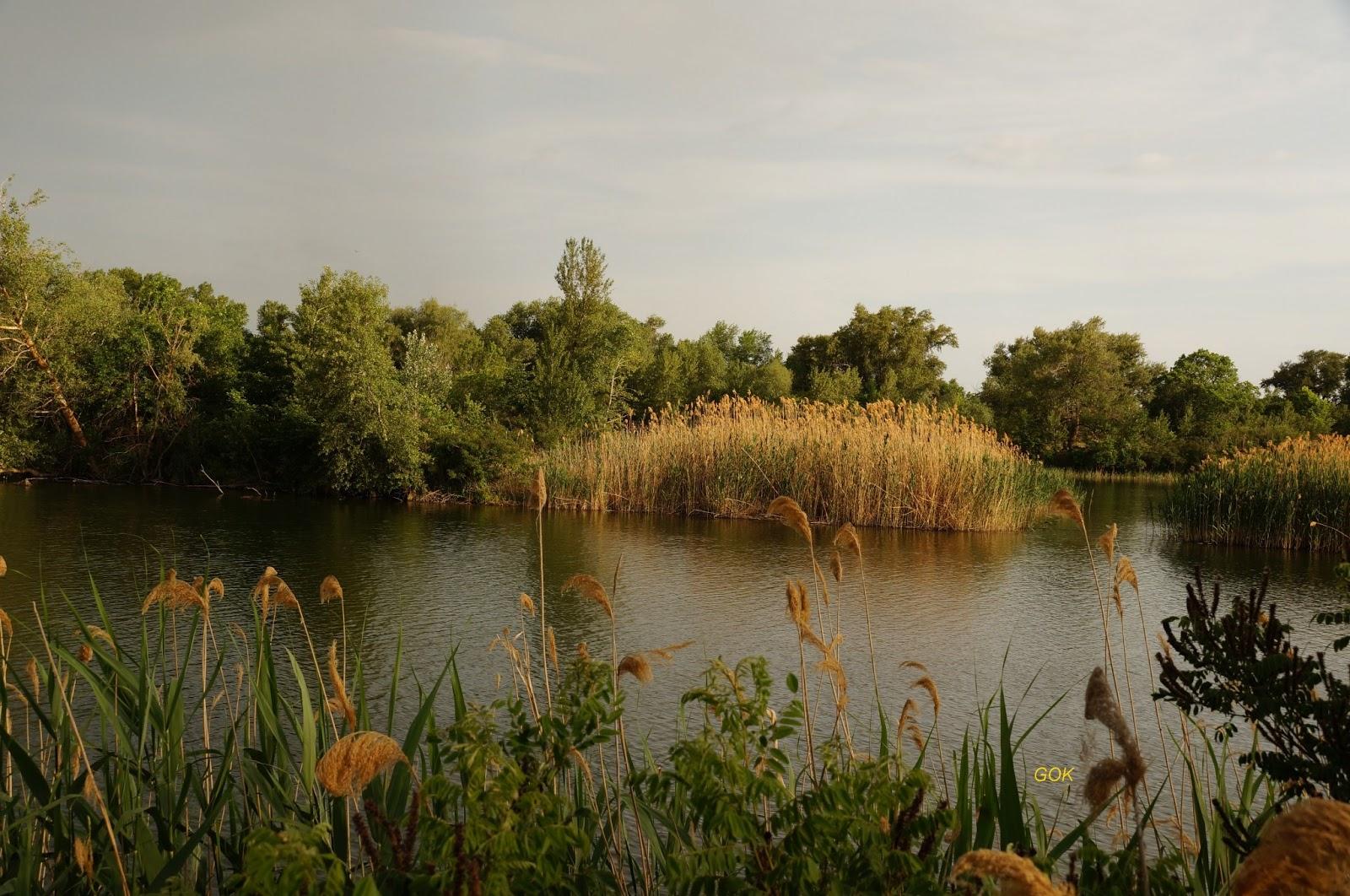 поэтому александровский лес ростовская область фото фото несколько жёлтых