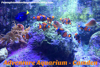Adventure Aquarium in Camden New Jersey