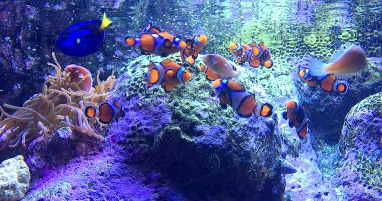 Pennsylvania & Beyond Travel Blog: Family Fun at Adventure Aquarium in Camden