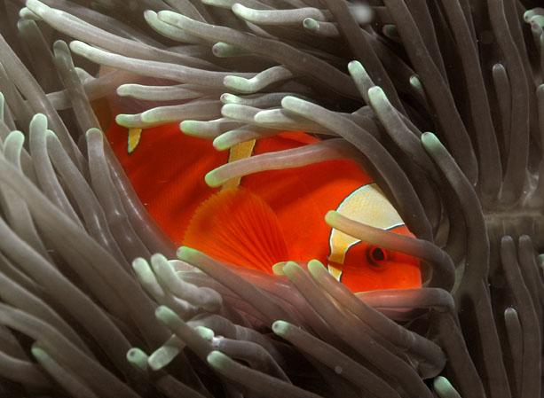 The Clown Fish Named Nemo