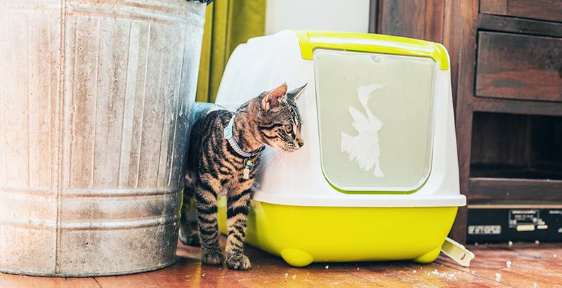 Comment choisir le bac à litière de votre chat ?