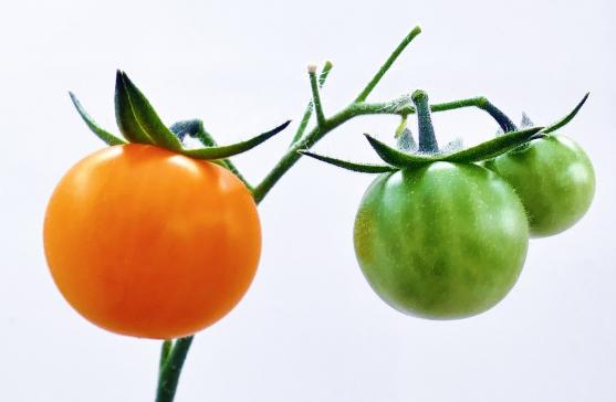 15  Buah - Buahan Yang Bermanfaat Untuk Membantu Pogram Diet Kamu