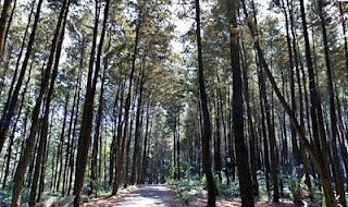 Mount Pancar, The Beautiful Place for Camping in Bogor, Indonesia