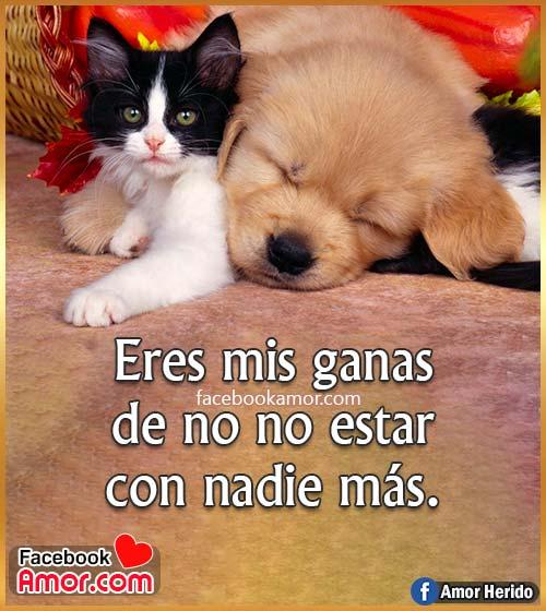 imágenes de gato y perro frases de amor