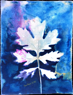 Wet cyanotype_Sue Reno_Image 496