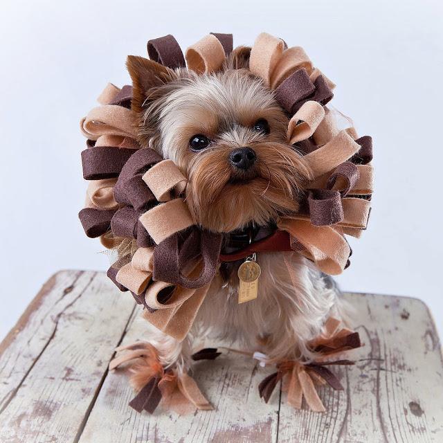 disfraz leon perro