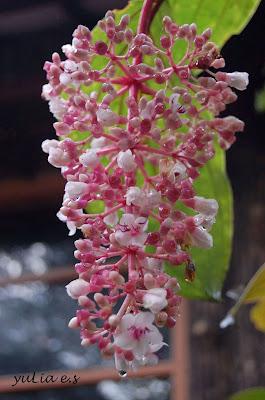 http://tipspetani.blogspot.com/2016/12/sekilas-info-tentang-buah-parijoto-dan.html