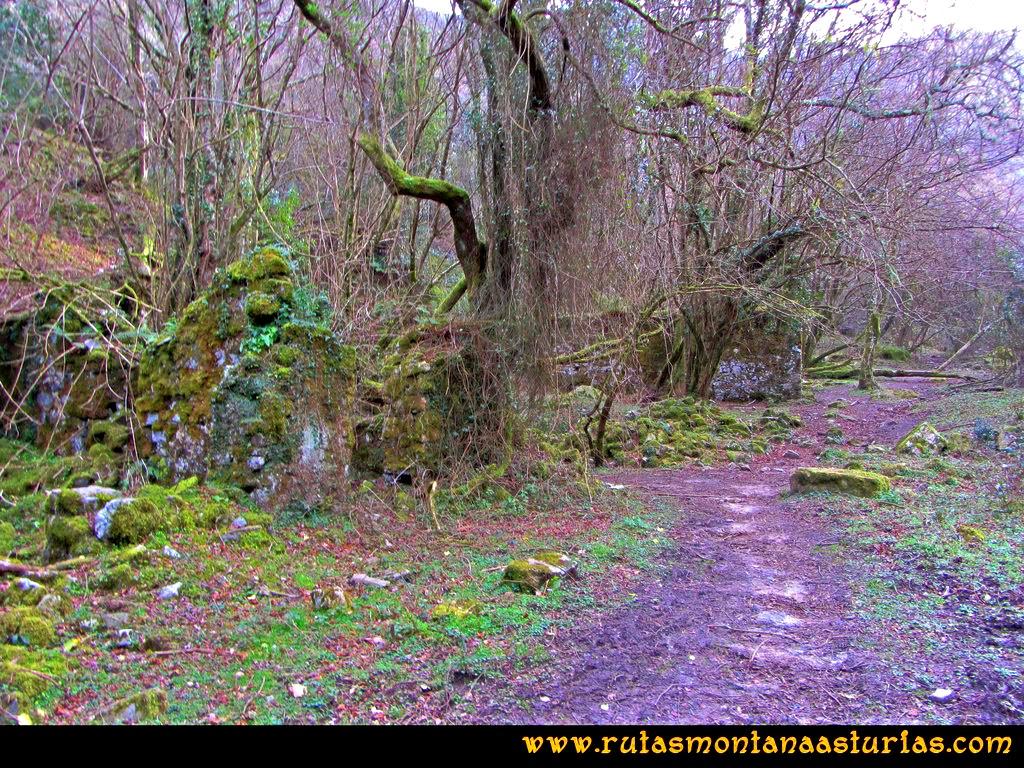 Ruta Montaña Pienzu: Restos de mina de la Toya en las afueras del hayedo de la biescona