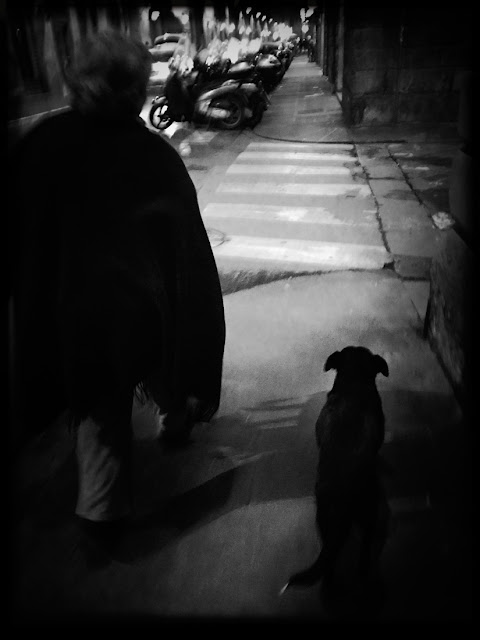 Dogs of Florence, dogs, Florence, Italy, canines, travel, walking