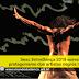 Sesc EntreDança 2019 apresenta protagonismo dos artistas negros nos palcos