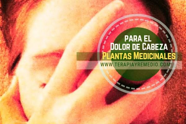 Plantas Medicinales para el dolor de cabeza que sustituiría a los analgésicos clásicos