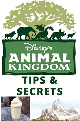 Insider Tips and Secrets for Disney's Animal Kingdom park