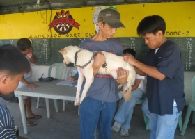 A dog vaccinated against rabies.