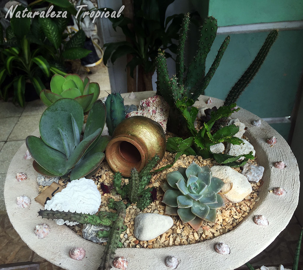 Naturaleza tropical galer a de arreglos con plantas for Decoracion con plantas en living