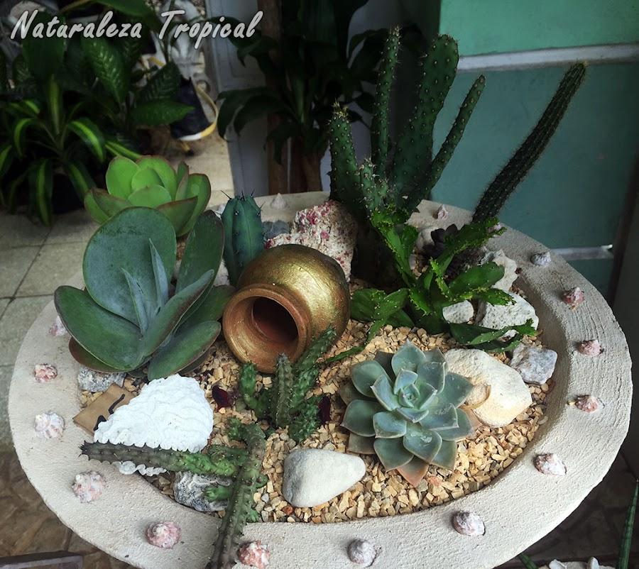 Decoración en maceta de hormigón con plantas suculentas