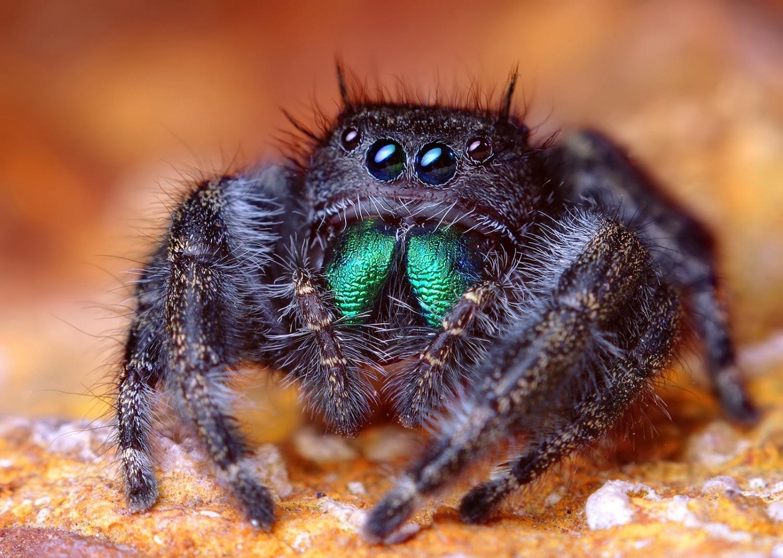 Always Avoid Alliteration: Spider Eyes