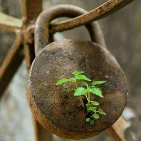 Confident | let us grow