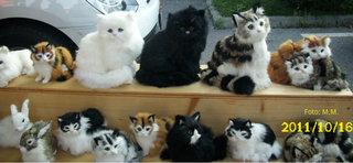 pisici din plus