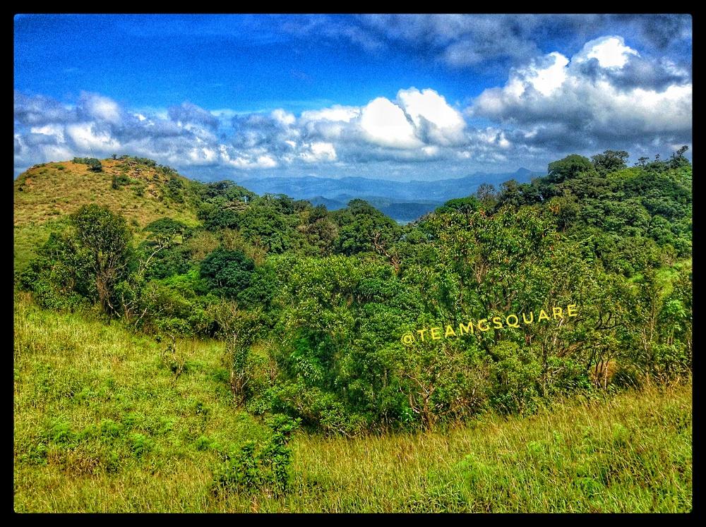 Forest Malenadu