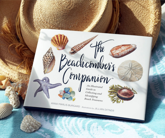 The Beachcomber Companion Book Illustrations