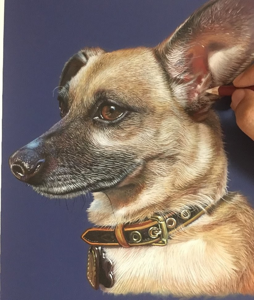 16-Fiona-The-Chiweenie-Dog-Ivan-Hoo-Animals-Translated-to-Realistic-Drawings-www-designstack-co