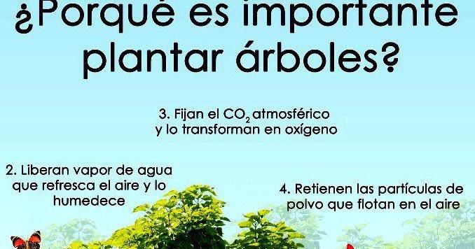 Arte y naturaleza por qu es importante plantar rboles for Porque son importantes los arboles wikipedia