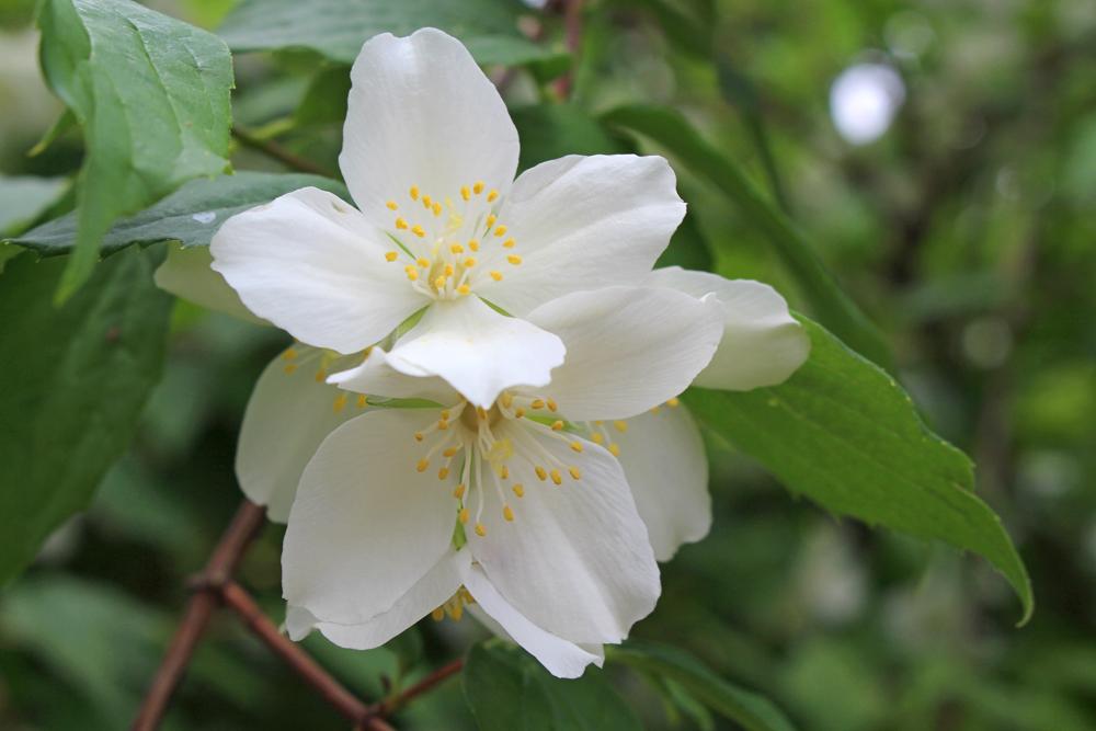 White flowers in Girona, Spain - travel & lifestyle blog