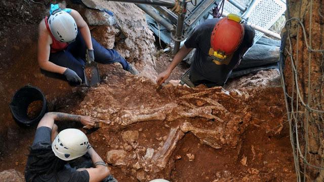 Skeleton of extinct rhinoceros species discovered in Spain