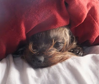 harley in bed
